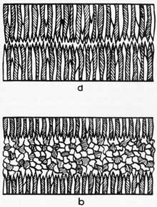 Figure 12. Dendritic solidification and dendritic-equiaxed solidification.